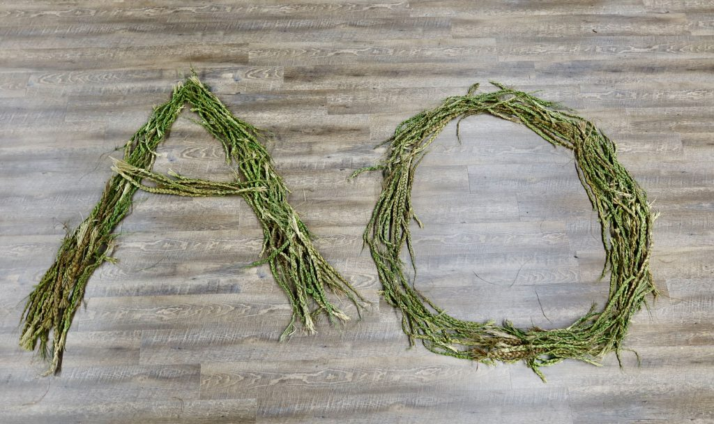 Sweetgrass braids that shape the letter A and O